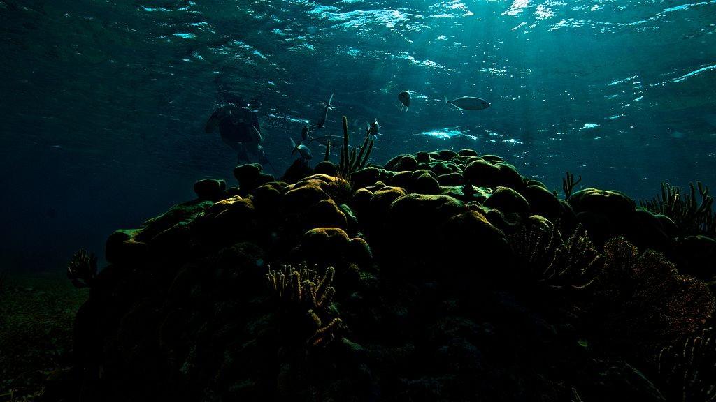 recif corail belize