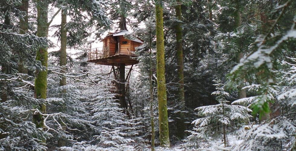 cabane arbres neige forêt