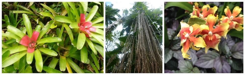 flore de hawaii