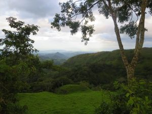 Monteverde vallons jungle