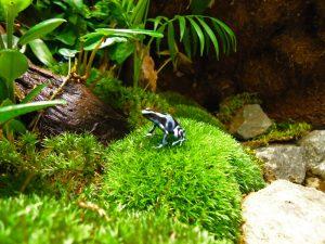 dendrobate azureus terrarium