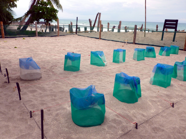 nids tortues plage montezuma costa rica