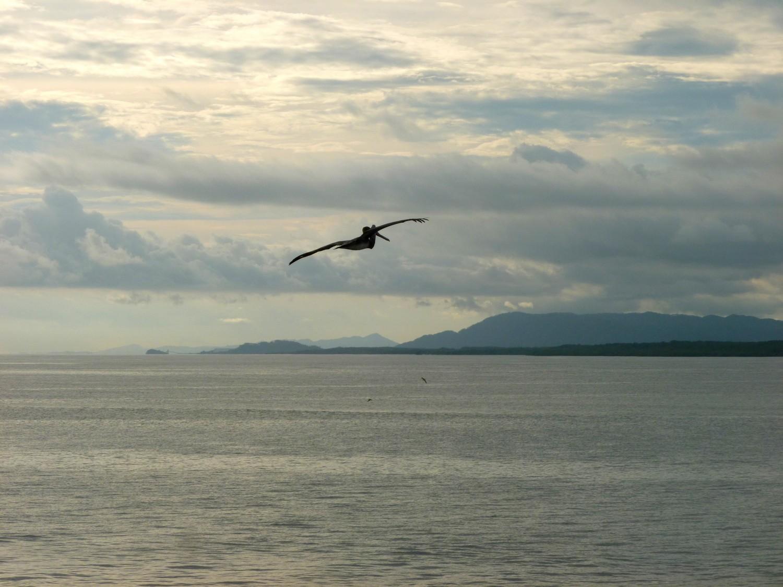 pelican puntarenas ferry costa rica