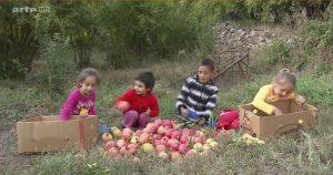 enfant récolte armenie grenade 360°GEO reportage
