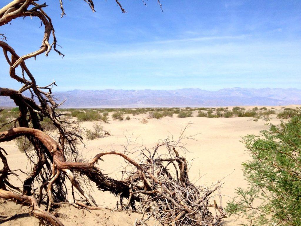mesquite dune de sable vallée de la mort