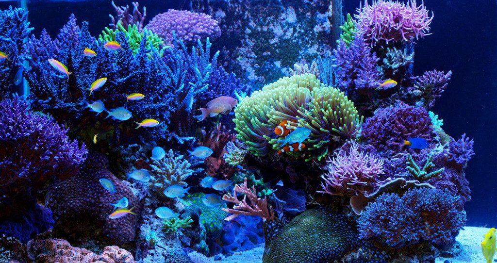 Aquarium-récifal