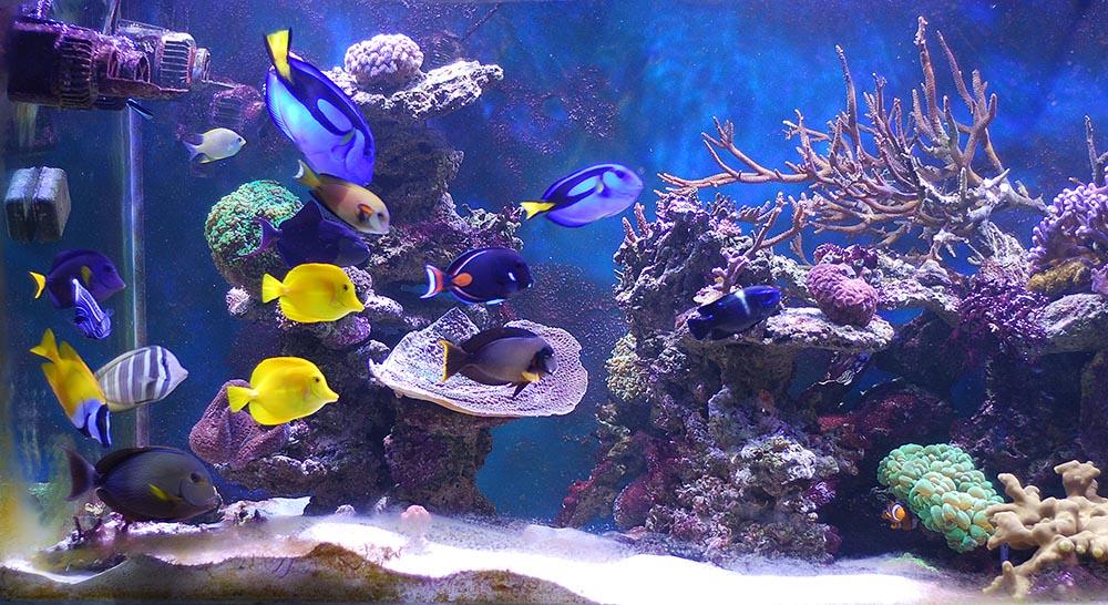 Faire Son Decor Aquarium