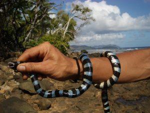 tricot rayé serpent venimeux