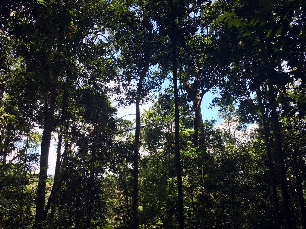 foret-gunung-leuser-sumatra