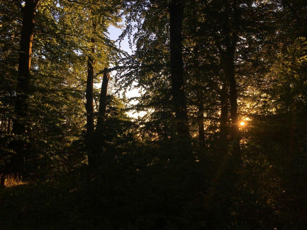 lever-soleil-foret-danemark