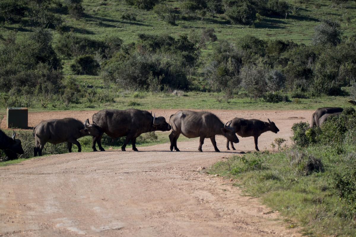 preparer seul safari afrique du sud