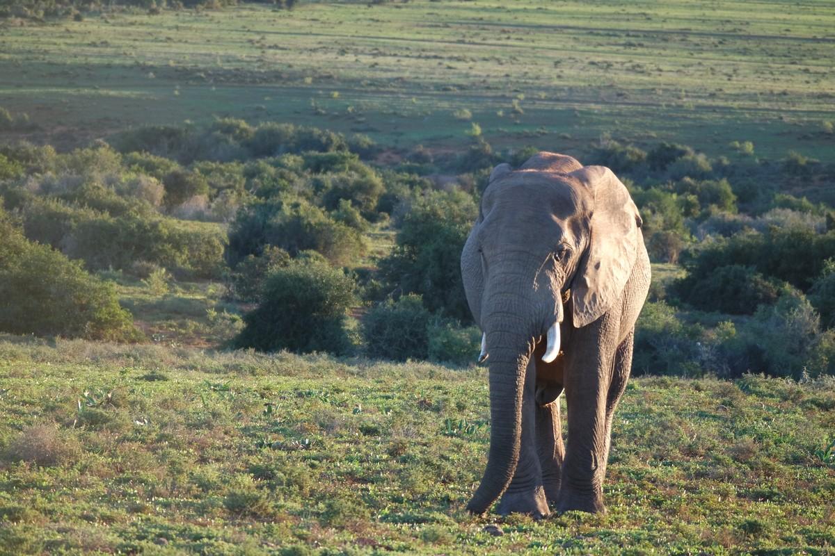 voir elephant sans guide afrique sud