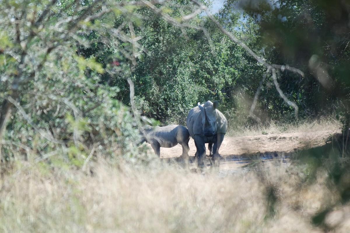 faire safari seul afrique du sud