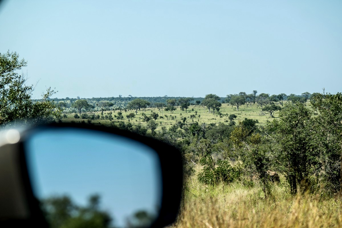 organiser safari seul afrique du sud