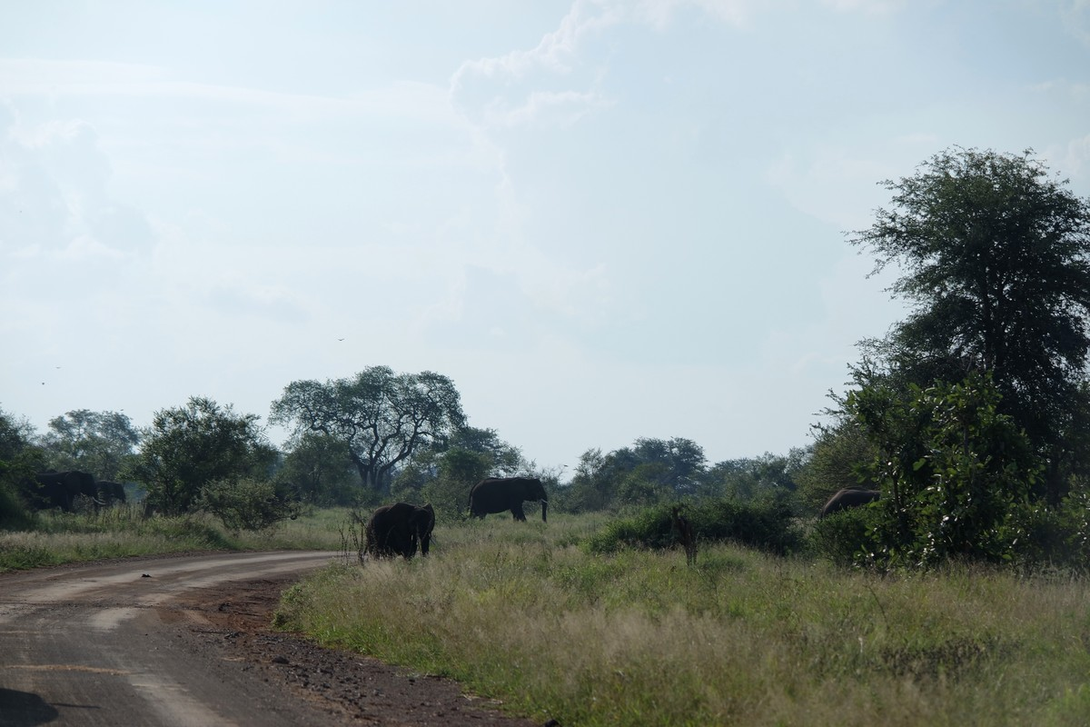 faire safari seul kruger