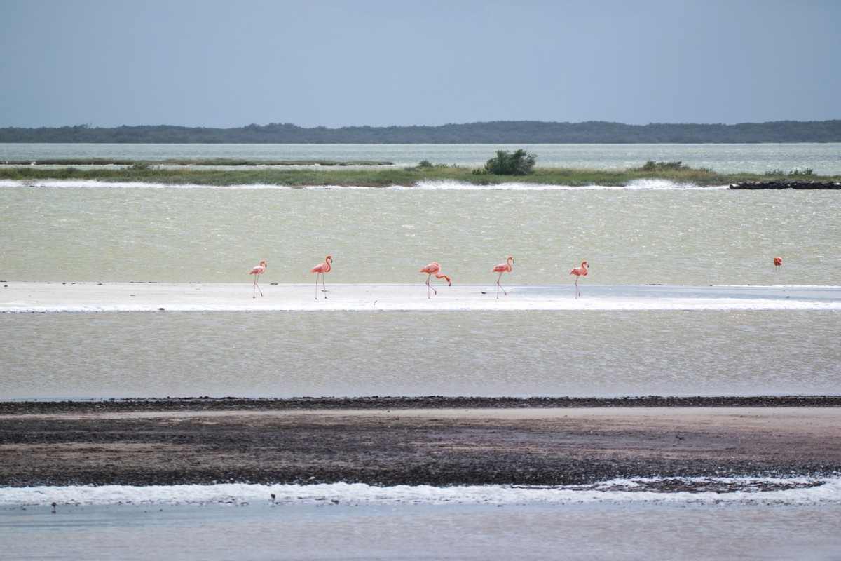 flamants roses yucatan los coloradas